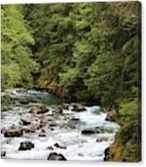 Ohanapecosh River Canvas Print