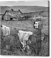 Palouse Barn 9901 Canvas Print