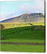 Penyghent In Yorkshire Dales National Park North Yorkshire Canvas Print