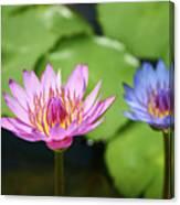 Pink Lotus Water Flower Canvas Print
