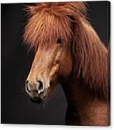 Portrait Of Horse Canvas Print