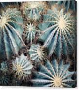 Rustic Macro Shot Of Cactus - Tropical 1 Canvas Print