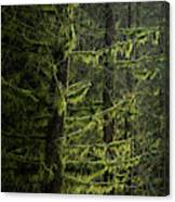 Stunning Fine Art Landscape Image Of Winter Forest Landscape In  Canvas Print