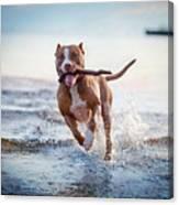 The Dog In The Water, Swim, Splash Canvas Print