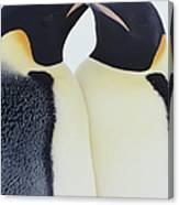 Two Emperor Penguins Aptenodytes Canvas Print