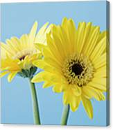 Yellow Flowers On Blue Background Canvas Print
