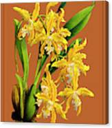Orchid Vintage Print On Tinted Paperboard Canvas Print