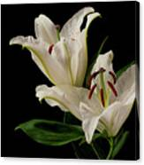 White Lily On Black. Canvas Print