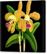 Vintage Orchid Print On Black Paperboard Canvas Print
