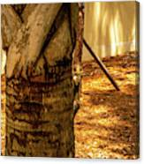 Branch To Branch Canvas Print