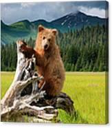 Brown Bear, Lake Clark National Park Canvas Print