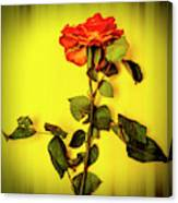 Dying Flower Against A Yellow Background Canvas Print