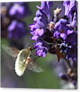 Fly Bee Canvas Print