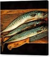 Fresh Mackerels Canvas Print