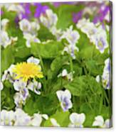 I Choose Spring Canvas Print