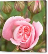 Pink Rose, International Rose Test Canvas Print