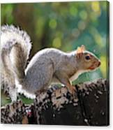 Squirrel Friend Canvas Print