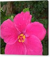Bright Pink Hibiscus Canvas Print