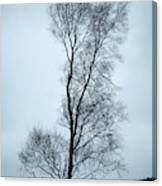 Moody Winter Landscape Image Of Skeletal Trees In Peak District  Canvas Print