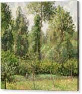 Poplars  Eragny  Canvas Print