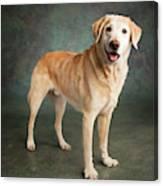 Portrait Of A Labrador Mixed Dog Canvas Print