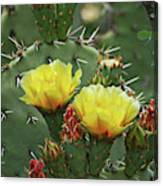Yellow Prickly Pear Flowers Canvas Print