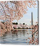 Washington Dc Cherry Blossoms And Canvas Print