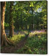 Stunning Bluebell Forest Landscape Image In Soft Sunlight In Spr Canvas Print