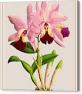 Orchid Vintage Print On Colored Paperboard Canvas Print