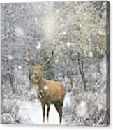 Beautiful Red Deer Stag In Snow Covered Festive Season Winter Fo Canvas Print