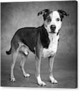 Portrait Of A Mixed Dog Canvas Print