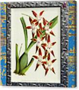 Orchid Framed On Weathered Plank And Rusty Metal Canvas Print