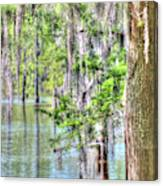 A Beautiful Day In The Bayou Canvas Print