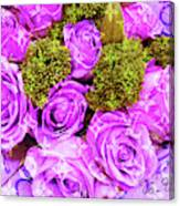 Lv With Lilac Roses  Canvas Print