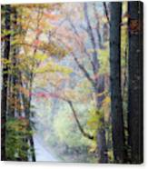 A Canopy Of Autumn Leaves Canvas Print