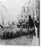 A Car Surrounded By Sheep, Lewes High Canvas Print