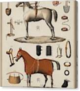 A Chromolithograph Of Horses With Antique Horseback Riding Equipments   1890  Canvas Print