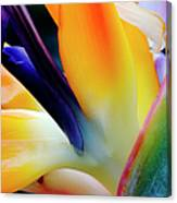 A Close-up Of A Flower Of A Bird Of Canvas Print