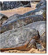 A Couple Of Turtles Stopped By Canvas Print