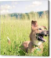 A Dog In The Park Canvas Print