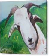 A Goat To Love Canvas Print