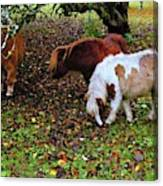 A Herd In 15 Feet Canvas Print
