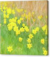 A Host Of Daffodils Canvas Print