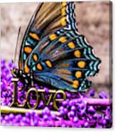 A Love Butterfly Canvas Print