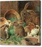 A Mother Rabbit And Her Young Canvas Print