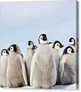 A Nursery Group Of Emperor Penguin Canvas Print