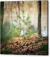 A Tiny Pine Canvas Print