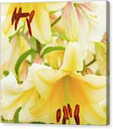 A Tower Of Lilies Canvas Print