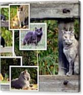 A Variety Of Cats Canvas Print