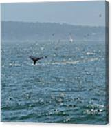 A Whale's Tail Above Water With Sail Boat In The Background Canvas Print